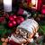 Natale · papavero · sementi · torta - foto d'archivio © Dar1930