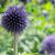 tok · çiçek · çiçekler · bahçe · güzellik · top - stok fotoğraf © dar1930