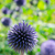 completo · flor · flores · jardim · beleza · bola - foto stock © dar1930