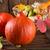 abóbora · cesta · projeto · folhas · milho · outono - foto stock © Dar1930