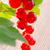 monte · vermelho · brilhante · verão · jardim · natureza - foto stock © dar1930