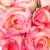 rosa · aumentó · flores · textura · amor - foto stock © darkkong