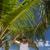красивый · мужчина · Мальдивы · Постоянный · пляж · плавник - Сток-фото © dash