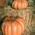 close up of halloween pumpkins stock photo © dashapetrenko