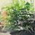 盆栽 · 画像 · いい · ツリー · 庭園 - ストックフォト © dashapetrenko