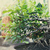 bonsai · imagen · agradable · pequeño · árbol · jardín - foto stock © dashapetrenko