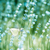 campo · de · lavanda · detalhes · planta · flor - foto stock © dashapetrenko