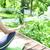 женщину · йога · саду · пышный · тропические - Сток-фото © dashapetrenko
