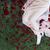 kadın · pedikür · kadın · ayaklar - stok fotoğraf © dashapetrenko