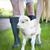 小さな · ヤギ · 自然 · 夏 · 日 · 動物 - ストックフォト © dashapetrenko