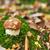 съедобный · лес · гриб · закрыто · зонтик · трава - Сток-фото © dashapetrenko