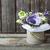 ramo · violeta · flores · blanco · aislado · espacio · de · la · copia - foto stock © dashapetrenko