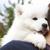 ras · groene · tuin · gras · puppy · vriend - stockfoto © dashapetrenko