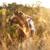 beautiful woman on a horse stock photo © dashapetrenko