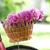 roze · fiets · park · hemel · boom · gras - stockfoto © dashapetrenko