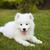 собака · саду · области · образование · зеленый · голову - Сток-фото © dashapetrenko