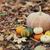 ancora · vita · zucche · autunno · vacanze · outdoor · fuori - foto d'archivio © dashapetrenko