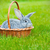cute · bebé · mascota · vacaciones · conejo · gris - foto stock © dashapetrenko