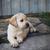 aanbiddelijk · golden · retriever · puppy · portret · baby · hond - stockfoto © dashapetrenko