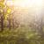 cenário · japonês · jardim · paisagem · folha · rocha - foto stock © dashapetrenko