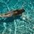 competitivo · natação · escola · secundária · reunir-se · água - foto stock © dashapetrenko