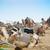tevék · Szahara · Marokkó · Afrika · nyáj · sivatag - stock fotó © dashapetrenko