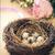 gyönyörű · mintázott · húsvéti · tojások · színes · fészek · terv - stock fotó © dashapetrenko
