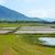 arrozal · grama · verde · blue · sky · nuvem · nublado · paisagem - foto stock © dashapetrenko