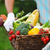 basket filled fresh vegetables in hands of a man stock photo © dashapetrenko