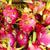 дракон · фрукты · белый · зеленый · азиатских - Сток-фото © dashapetrenko