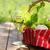 różny · ser · białe · wino · winogron · dwa · okulary - zdjęcia stock © dashapetrenko