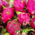 pitaya dragon fruit stock photo © dashapetrenko