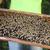 bijen · huis · hout · natuur - stockfoto © dashapetrenko