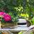 prado · flores · vermelhas · mães · dia · branco · cinza - foto stock © dashapetrenko