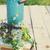 virágok · locsolókanna · klasszikus · hatás · fénykép · tavaszi · virágok - stock fotó © dashapetrenko