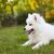 cão · jardim · campo · educação · verde · cabeça - foto stock © dashapetrenko
