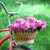 vintage bicycle with basket with peony flowers stock photo © dashapetrenko