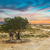 tunisian landscape with lonely tree stock photo © dashapetrenko