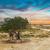 solitaire · arbre · coucher · du · soleil · soleil · nature · fond - photo stock © dashapetrenko