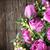 weiß · Tulpen · frischen · leer - stock foto © dashapetrenko
