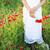 rojo · amapola · flores · campo · verano - foto stock © dashapetrenko