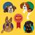 szett · különböző · kutya · husky · uszkár · internet - stock fotó © dashikka