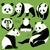 bébé · panda · illustration · blanc · noir · souriant · sourire - photo stock © dashikka
