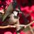 casa · pardal · feminino · sessão · cerca · pássaro - foto stock © davemontreuil