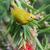 afrikai · citromsárga · virág · madár · Afrika - stock fotó © davemontreuil