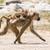 bebê · amarelo · babuíno · equitação · mães · de · volta - foto stock © davemontreuil