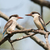 Striped Kingfisher pair (Halcyon chelicuti) perched on a branch stock photo © davemontreuil