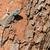 masculino · lagarto · árvore · África - foto stock © davemontreuil