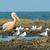Чайки · пород · морем · иллюстрация · воды - Сток-фото © davemontreuil