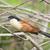 Senegal · doğa · kuş · Afrika · profil · ayakta - stok fotoğraf © davemontreuil
